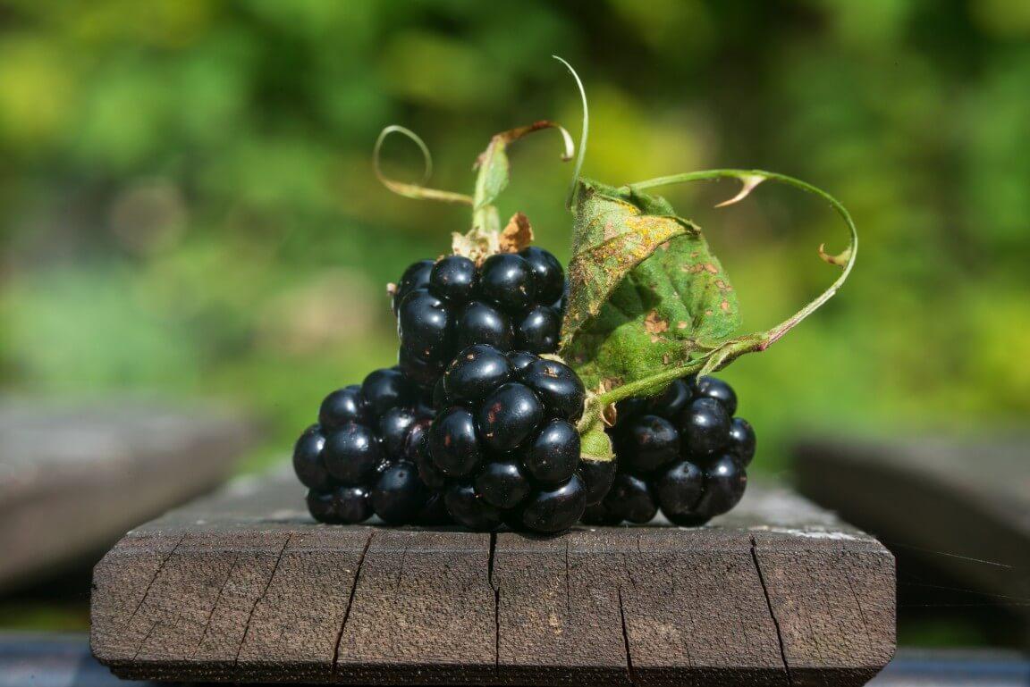 Blackberries macro