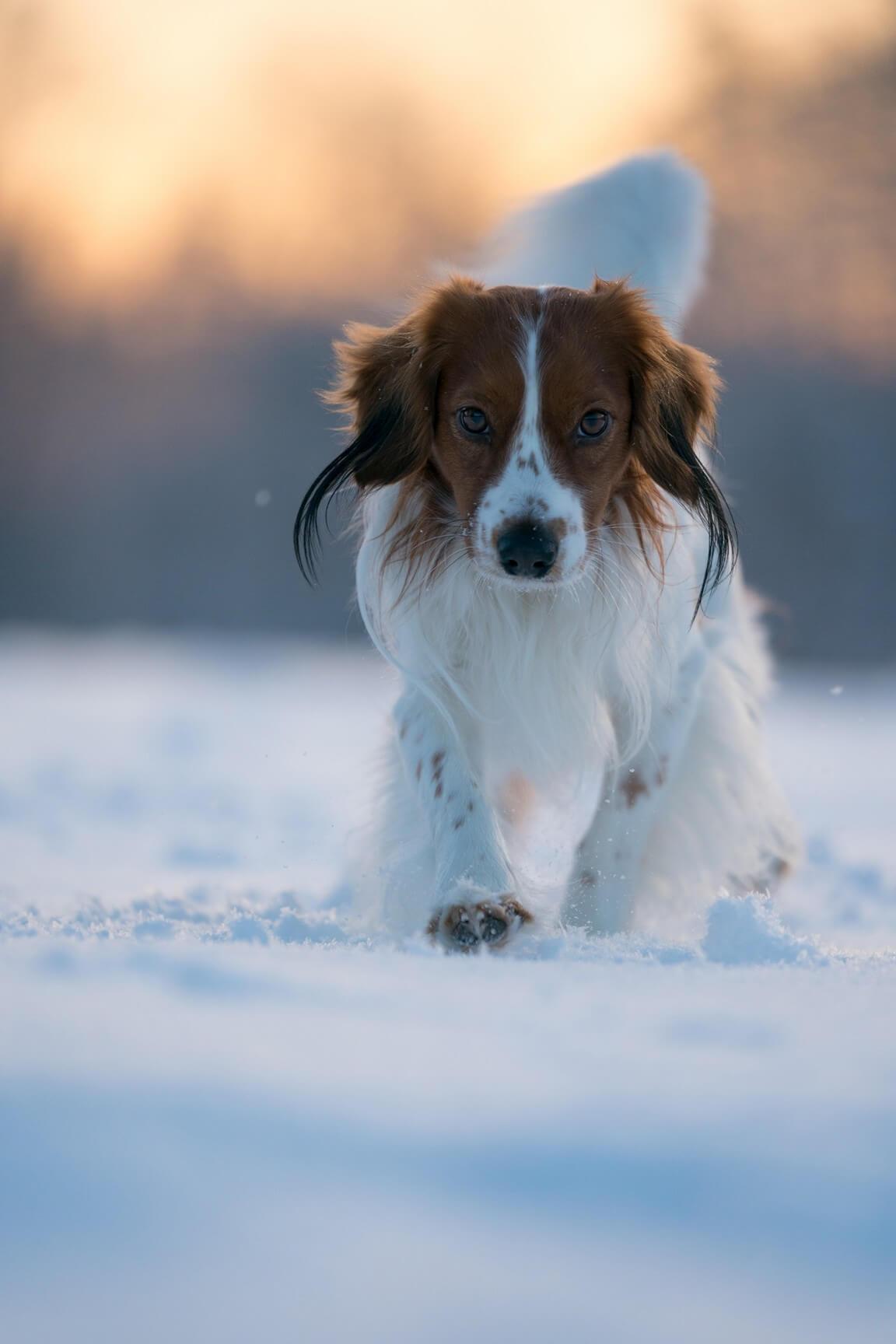 Dog Felix from Wonderland