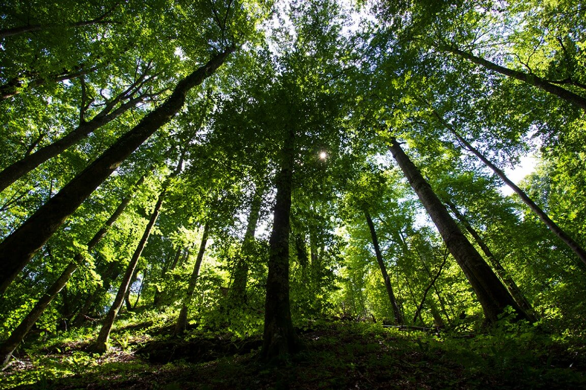 Raw photo of Forest in Plitvice lakes