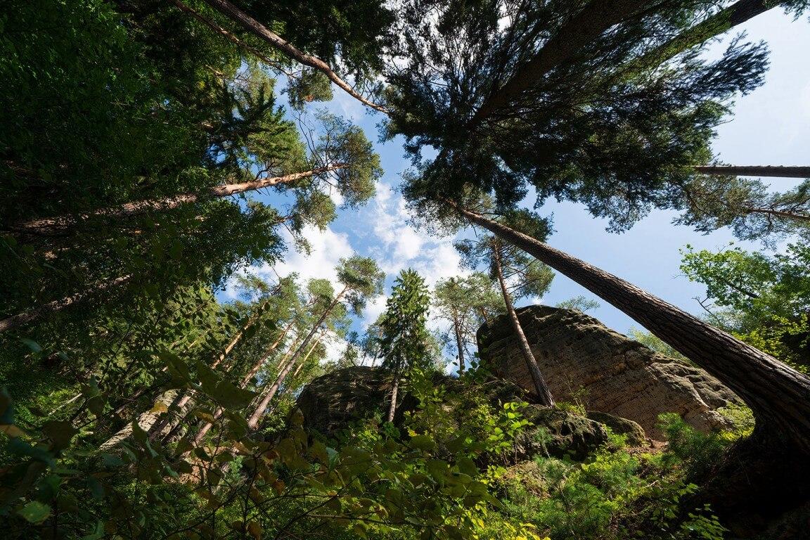Forest under Mariina view