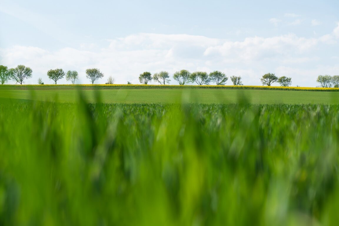 Grass field with horizon of trees